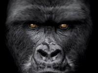 Величественная горилла