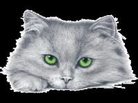 Кот зеленые глаза