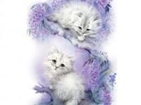 Два кота ветка