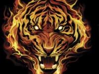 Пылающий тигр