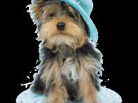 Щенок в голубой шляпке